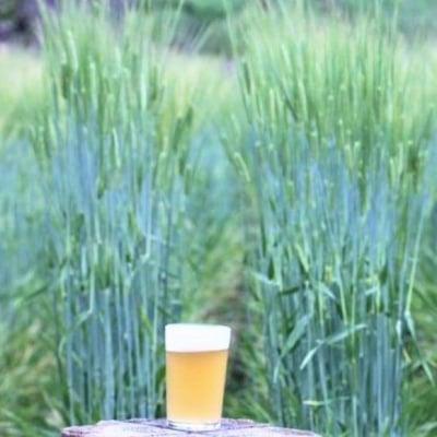 ビール1杯または料理1品付き入場チケット