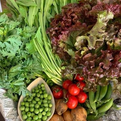 Eベジ野菜セット Sサイズ