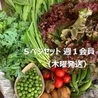 Sベジセット週1会員(木曜発送)