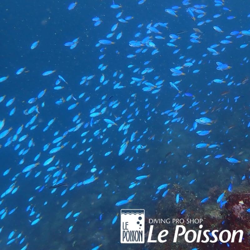 海洋での体験ダイビングのイメージその4