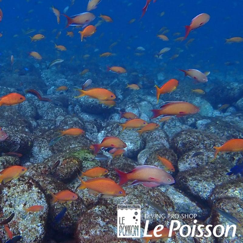 海洋での体験ダイビングのイメージその3