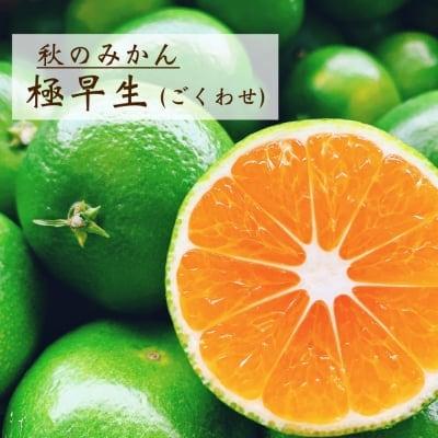 【愛媛県産】極早生 ごくわせ ご家庭・友人・贈答用 3kg