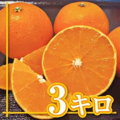 【愛媛県産】愛媛28号 えひめ28号 ご家庭用 3Kg