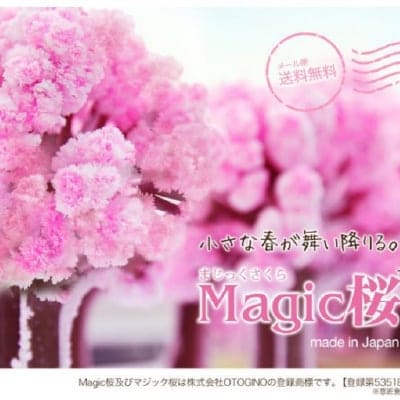 Magic桜 魔法の水をかけると12時間で咲く不思議な桜 メール便送料無料