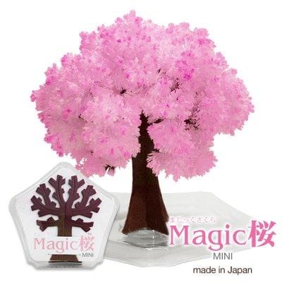 Magic桜MINI 魔法の水をかけると6時間で咲く不思議な桜ミニタイプ メ...