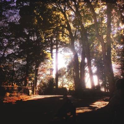 Landscape - Photo
