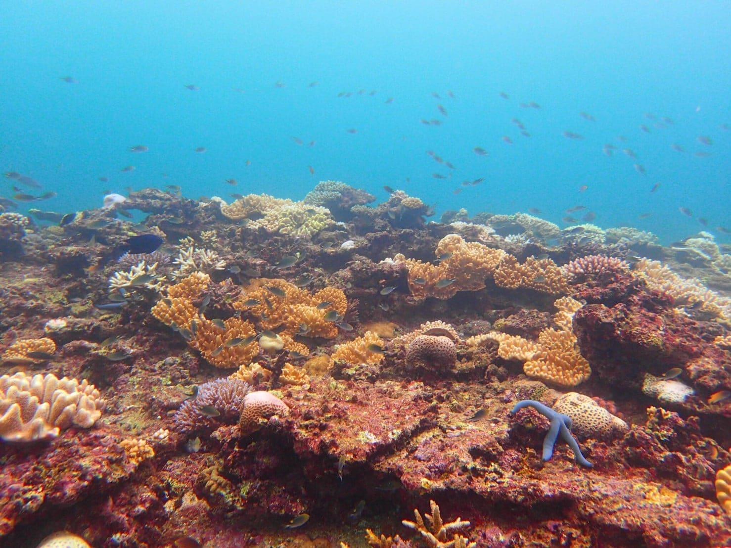 安心【沖縄・恩納村・青の洞窟】ゆったり体験ダイビングのイメージその5