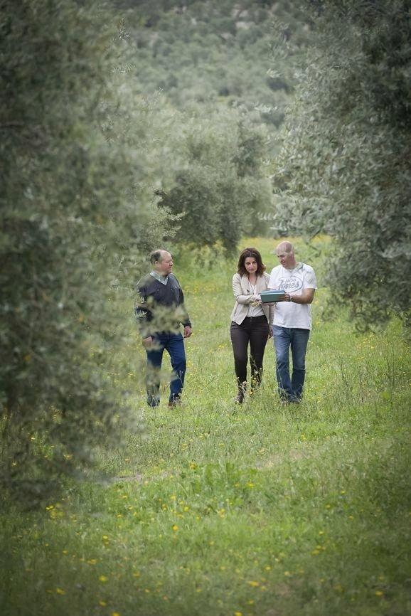 オリーブオイル 大人気 スペイン産 センテナリウム500mlのイメージその4