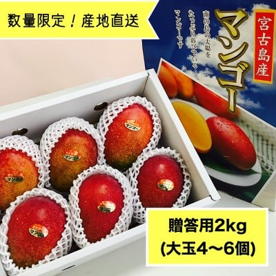 【全国送料無料・贈答用20箱限定】沖縄県宮古島産マンゴー農家さんから採れたて産地直送!2kg(大玉4〜6個)高ポイント還元中!