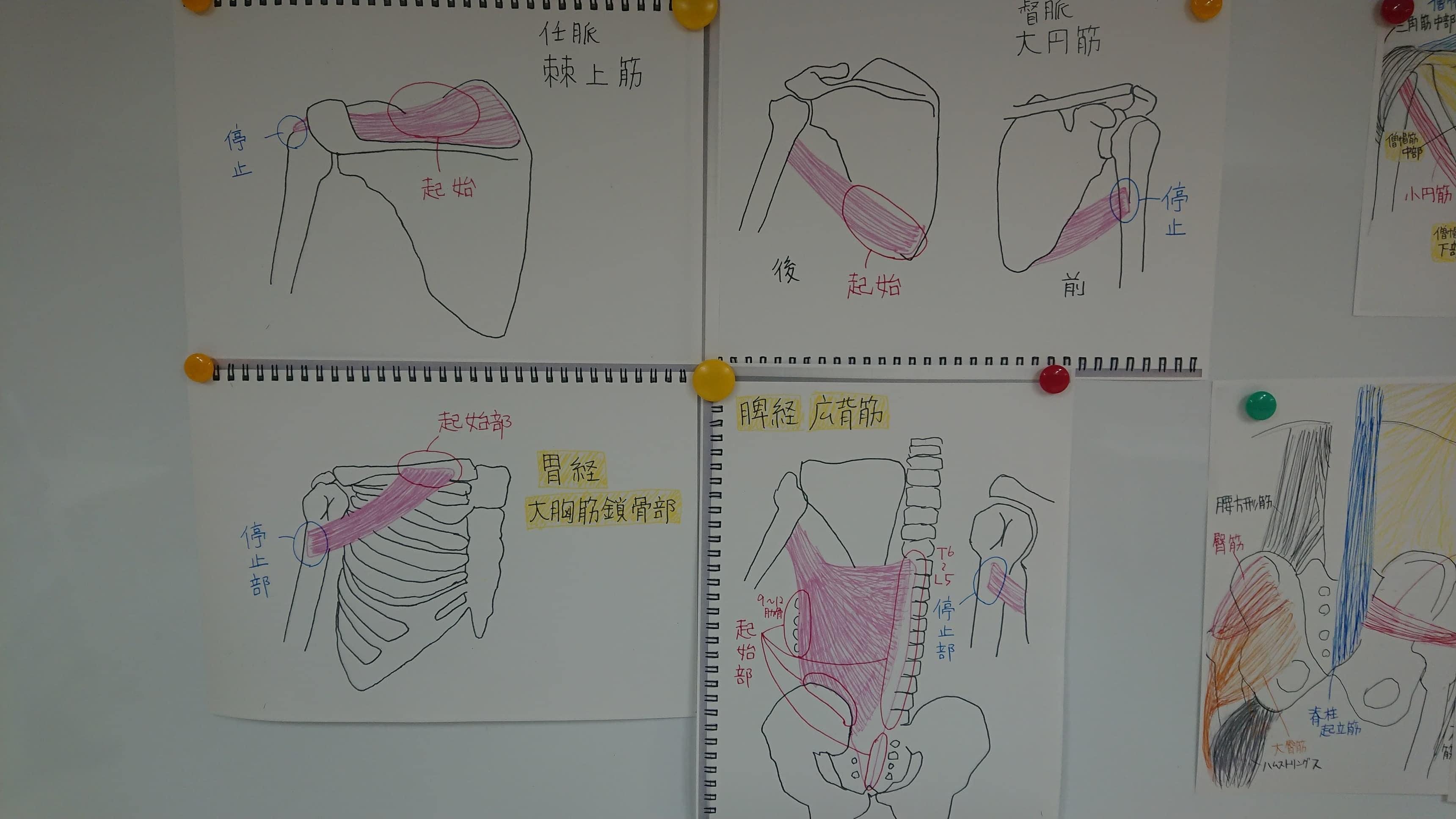 タッチフォーヘルス 公式クラスレベル3(再受講)のイメージその2
