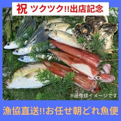 【オープン記念!!7/31まで!!】漁協直送!!お任せ朝どれ魚便