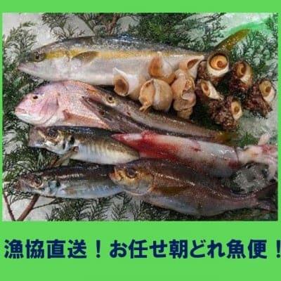 漁協直送!!お任せ朝どれ魚便【赤碕町漁協】