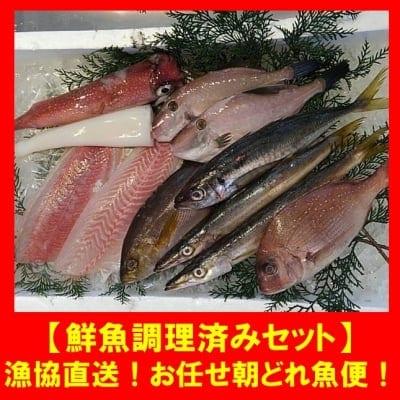 漁協直送!!お任せ朝どれ魚便【鮮魚調理済みセット】