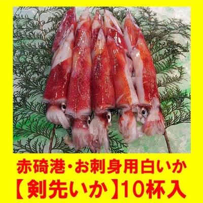 赤碕港・お刺身用白いか【剣先いか】10杯入
