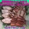 旬の魚を食卓へ山陰産干物セット5種詰め合わせ 期間限定8/31日まで通常6,000円のところ5,000円(スルメイカ3枚、白ハタ10尾、エテカレイ4枚、アジ4枚、トビウオ7枚)