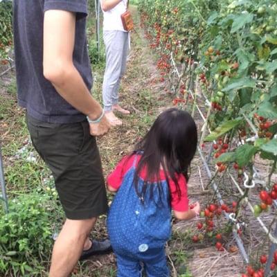 追加オプション「無農薬野菜収穫体験」