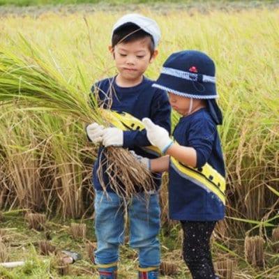 【2020年産新米】無農薬米 「一目惚れ」2キロ