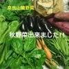 【予約販売】旬の秋野菜詰め合わせパック