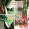 旬の冬野菜ぎっしり入った詰め合わせパックがお買得!!奈良山麓野菜