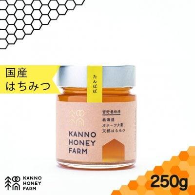 【2020年北海道最初のハチミツ】北海道産天然はちみつ たんぽぽハチミツ 250g