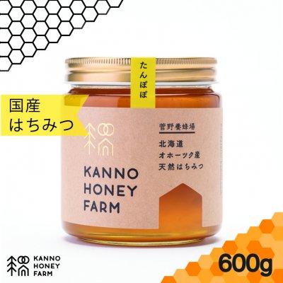 【北海道の春を知らせるハチミツ】北海道産天然はちみつ たんぽぽハチミツ 600g