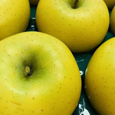 【シナノゴールド】山形リンゴ 5キロ 11月上旬頃出荷 別途送料