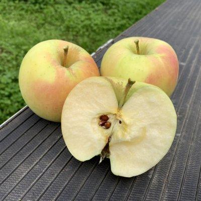 【ぐんま名月】山形リンゴ 3キロ 11月上旬頃出荷 別途送料