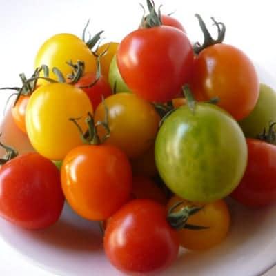 カラフルミニトマト 800g◆5品種以上◆約60〜80玉