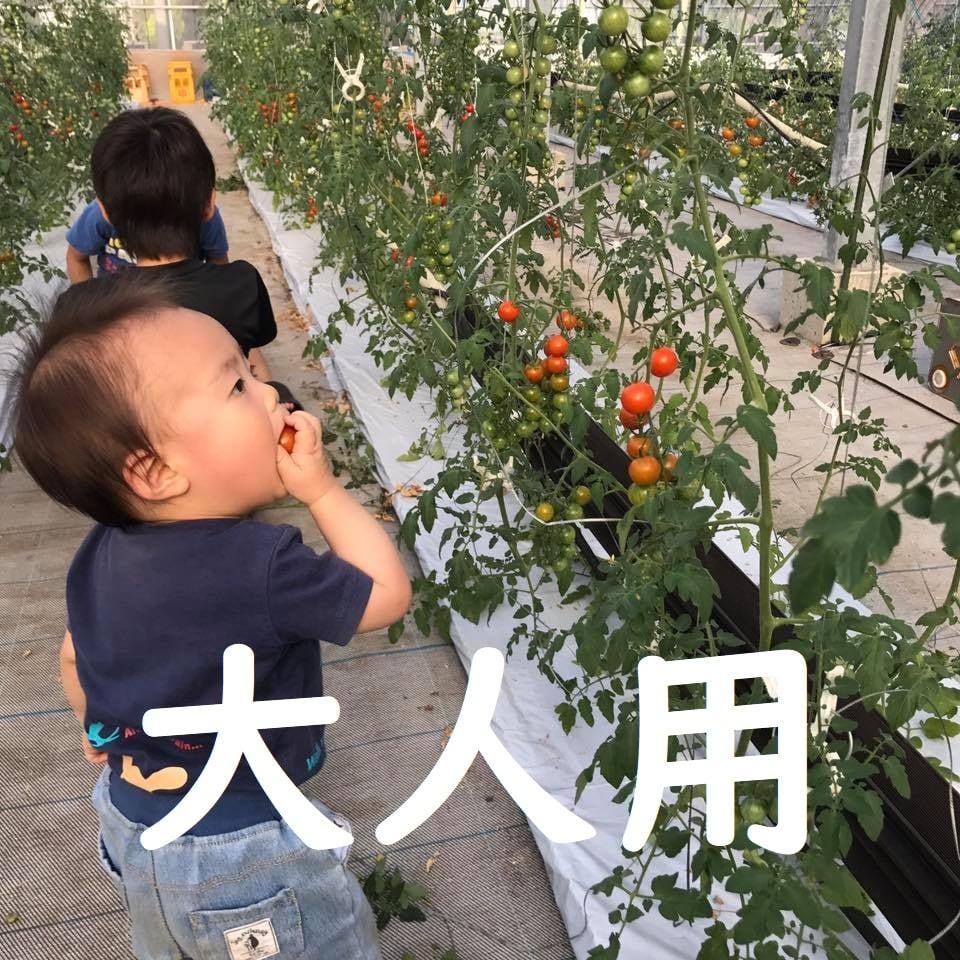 ◆2月分大人【トマト狩り】30分食べ放題!10種類のトマトを食べ比べ・ご堪能プラン!のイメージその1