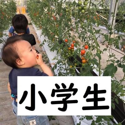 ◆2月分小学生【トマト狩り】30分食べ放題!10種類のトマトを食べ比べ・ご堪能プラン!