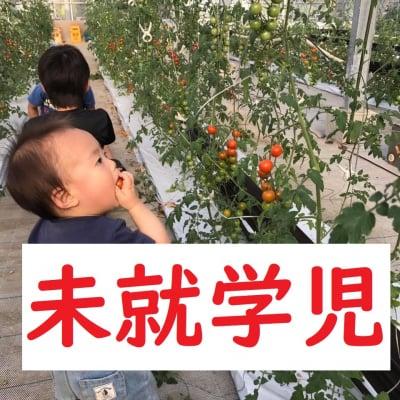 ◆2月分未就学児【トマト狩り】30分食べ放題!10種類のトマトを食べ比べ・ご堪能プラン!