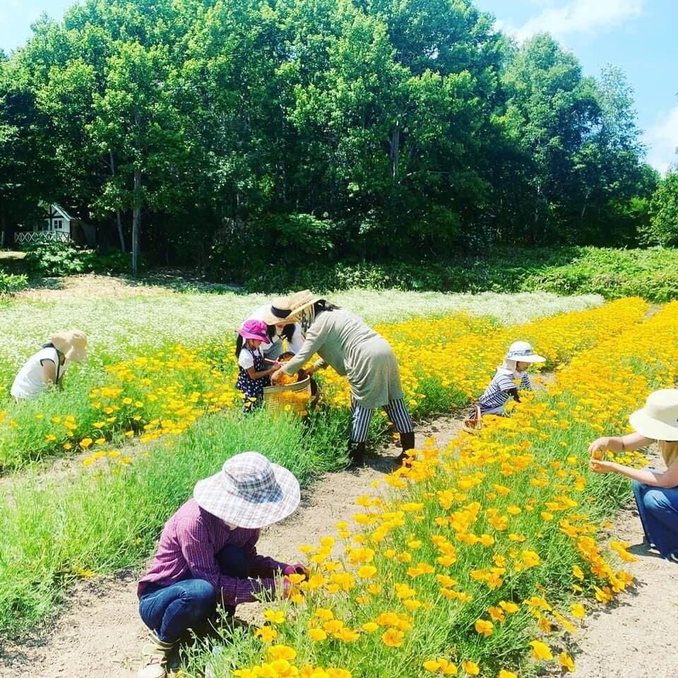 オーガニックハーブ収穫体験inLienfarmのイメージその4