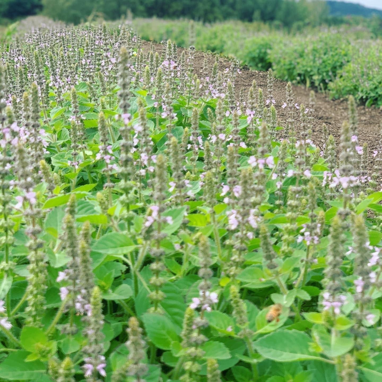 オーガニックハーブ収穫体験inLienfarmのイメージその1