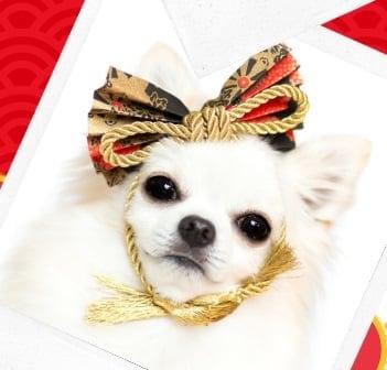 1/25(土)わんわん新年会2020-『ODA DOG』・・・2匹目以降のわんこ専用
