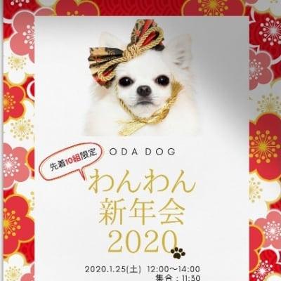 1/25(土)わんわん新年会2020-『ODA DOG』・・・人間一人分チケット