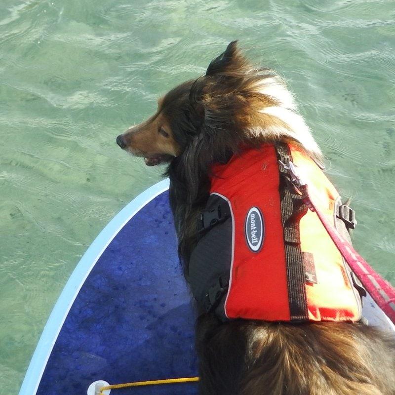 DOG SUP school 犬のみのイメージその5