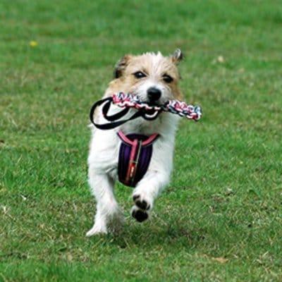 EZYDOG 犬用トイ ビーバーテイル S