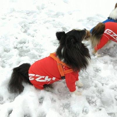 EZYDOG 犬用ロングスリーブラッシュガード XS【全二色】