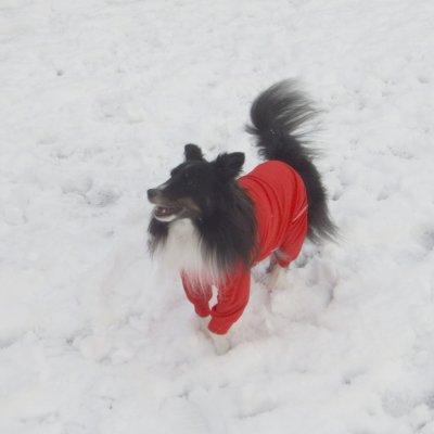 EZYDOG 犬用ロングスリーブラッシュガード〔サイズ:L〕【全二色】