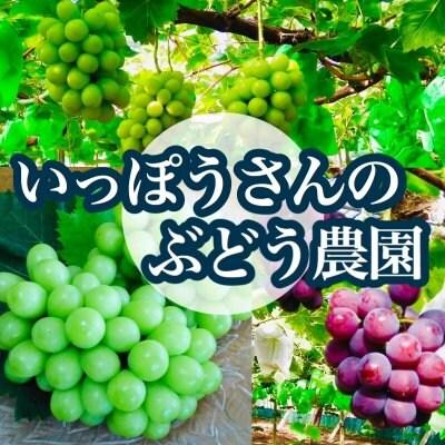 送料無料!1kg【晴王】シャインマスカット(2房)