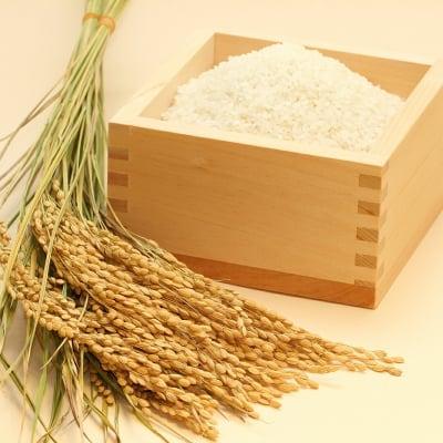 福岡県朝倉産のおいしいお米(はくまい) 10kg(5kg×2)