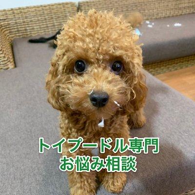 トイプードル専門【愛犬お悩み相談】