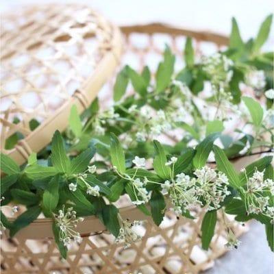 MS様専用【3・4月のクッキング&テーブル】春の和食レッスン「 春風に誘われて♪」