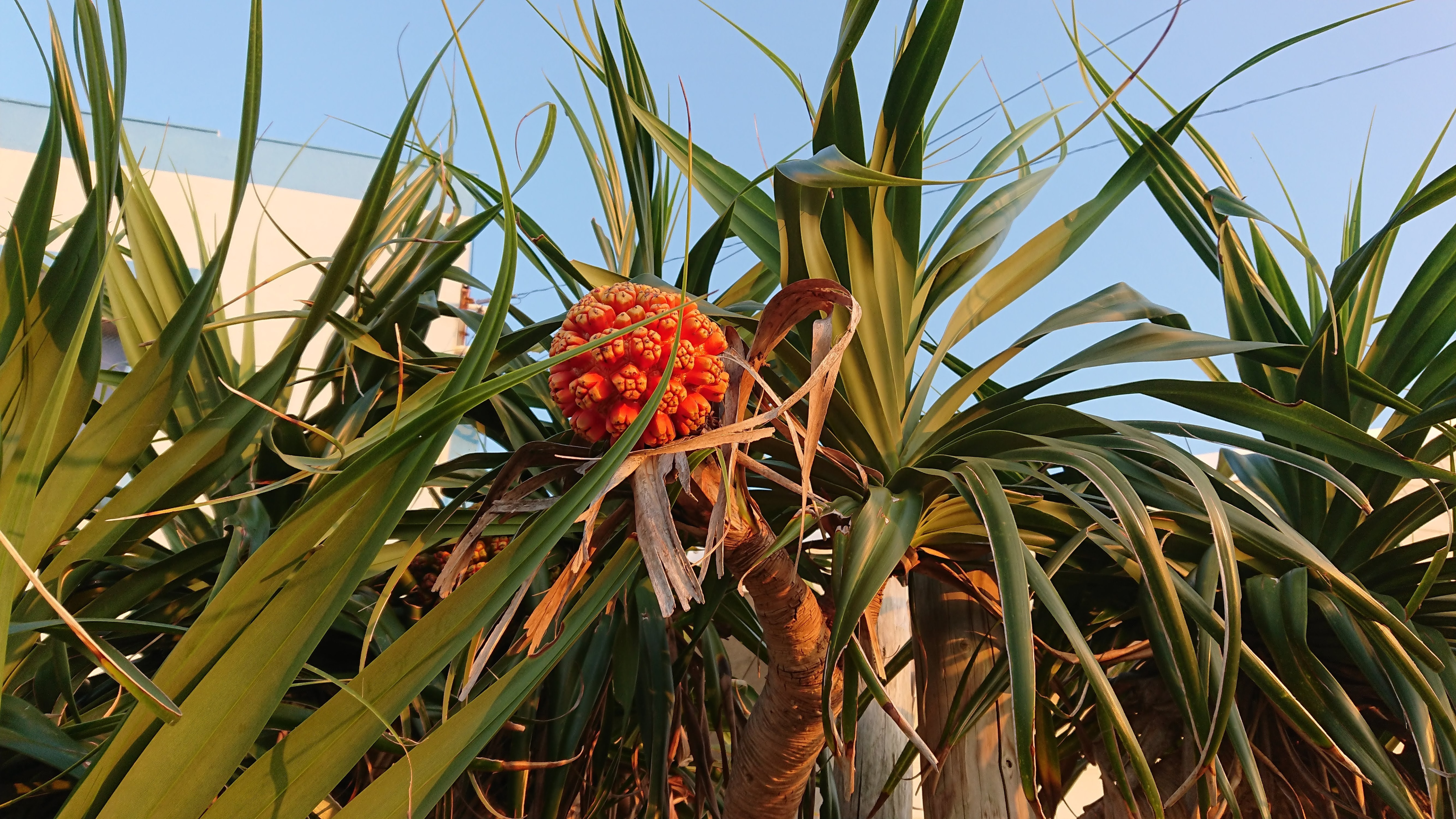 奄美群島認定エコツアーガイドがご案内する与論島内巡りツアー「午後コース」【現地決済のみ】のイメージその2