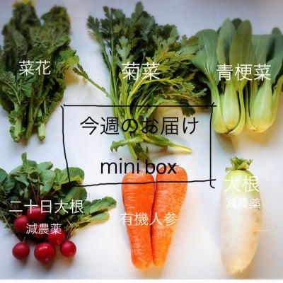 今週の丹波野菜 お届けmini box 60size 送料無料