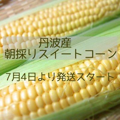 丹波産朝採れスイートコーン10本入り【200ポイント】