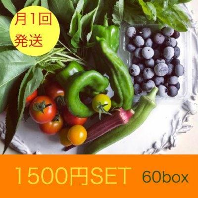 月1回金曜日発送TAMBANIC.たんばにっく旬の野菜セット60サイズ
