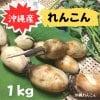 【自然栽培 手掘りれんこん】1kg