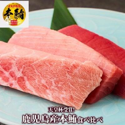 最高級薩摩クロマグロ【本マグロ】全部位食べ比べセット|送料無料|天皇杯受賞