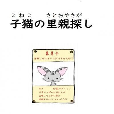 犬猫支援絵本【子猫の里親探し】